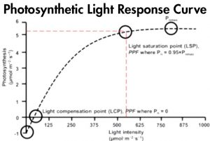 Photosynthetic Light Response Curve
