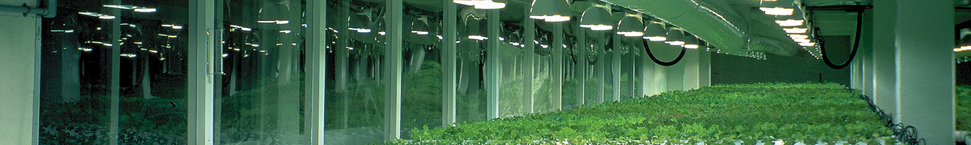 Sunmaster Grow Lamps in action