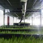 horse fodder production using Sunmaster Grow Lamps